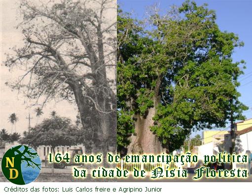 164 de emancipação política de nísia floresta